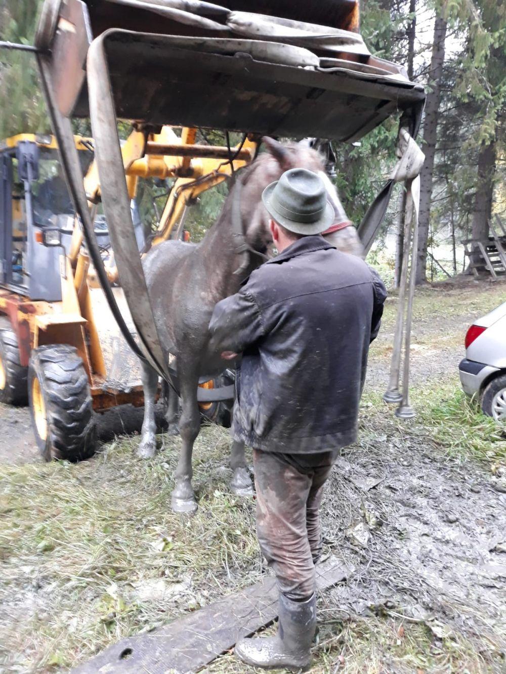 Pompierii maramureșeni au salvat un cal cu... excavatorul